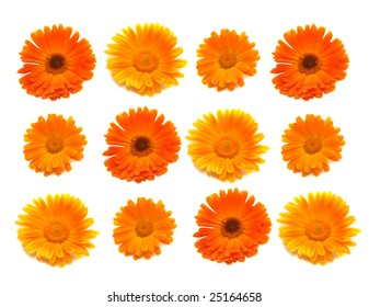 Many bright orange colors of a calendula on an easy background.