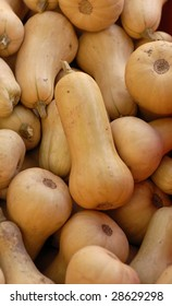 Many Butternut squash for sale at an outdoor farmers market.