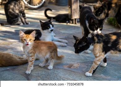 Many cats feeding in a backyard