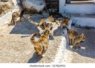 many cats at mykonos town