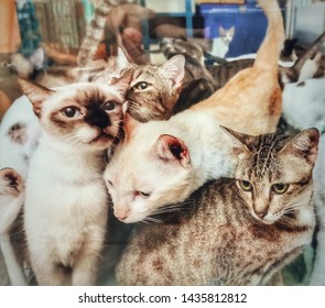 Many cats are in the same room, a lot of cats.