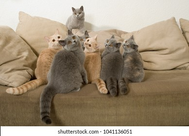 Many cats sit on a couch and looking up