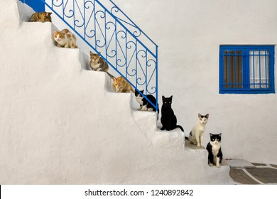 Many cats of various colors sitting lined up on steps of a whitewashed stairway with a blue wrought iron staircase railing in a Greek village alleyway, Cyclades, Aegean island, Greece, Europe