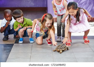 Many children in the kindergarten are curiously petting a turtle