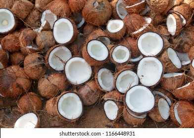 Many coconuts cut in half in organic farm. A lot or heap of fresh tasty coco in Kerala India dried in sun to make oil from copra. member of the family Arecaceae palm family. charcoal and coir. drupe