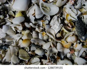 Many colored small shells on the Caspian coast