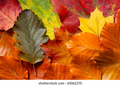 Many of colorful autumn leaves