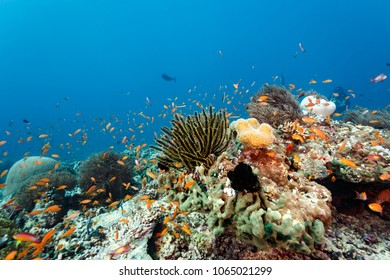 Many colorful fish swimming on healthy coral reef head showing  soft and hard corals