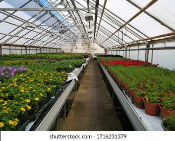 Many colorful flowers in a green house. Production and cultivation flowers and vegetable plantation in the high technology with temperatur control in the spring time at Arendal city. Norway.