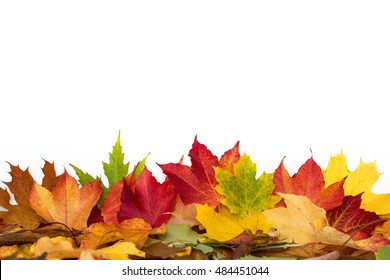 many colorful leaves on a white background