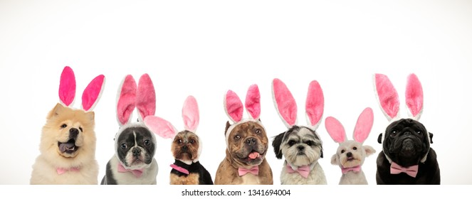 many cute easter dogs wearing pink rabbit ears on white background