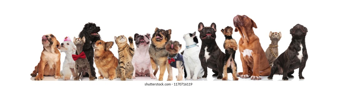 many cute pets looking up while sitting, lying and standing on white background, wearing collars and red bowties