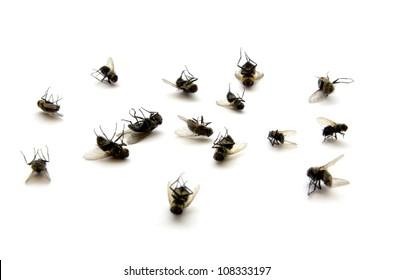 Dead Fly Clip Art