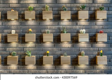 Many different cactuses in the light-wooden pots with backlight on the brick wall. Horizontal.
