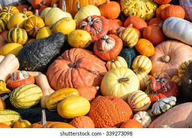 Many different colored pumpkins