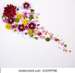 Many different flowers on a white background