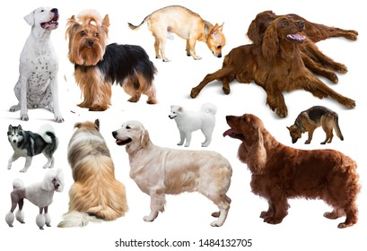 many different kinds of dog breeds isolated on white