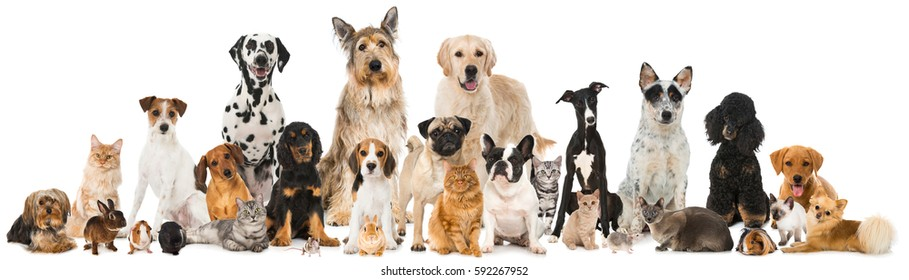 Many different pets isolated on white