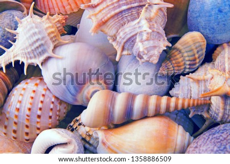 many-different-seashells-piled-together-