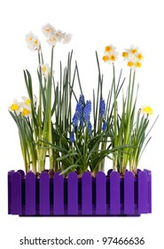 Many different spring flowers in purple pot isolated on white