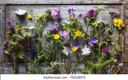 Many different wild flowers on old wooden background before making herbarium