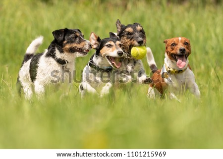 Many dogs run and