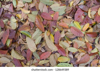 many dried leaves for background
