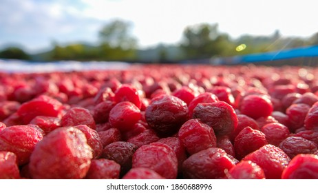 Many of dried red plum in the ground of dried plum factory