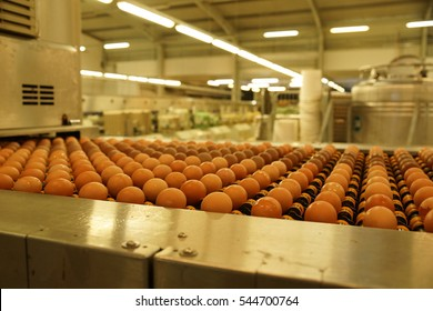 Many egg facility systems in factory warehouse