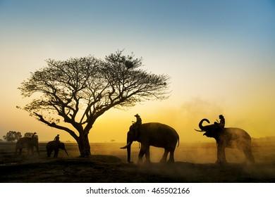 Many elephant with dry tree in wild area