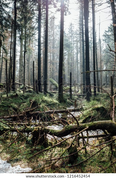 Many fallen trees, natural Ecosystem, Portrait