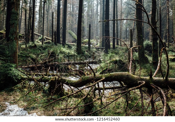 Many fallen trees, natural Ecosystem