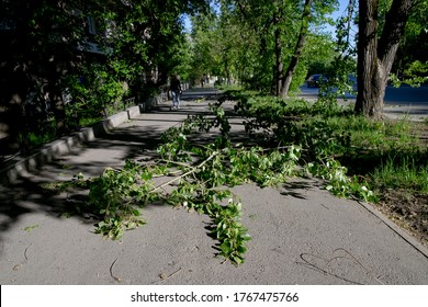 Many fallen trees on the highway after a summer storm