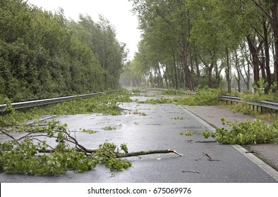 Many fallen trees on the highway after a summer storm in the Netherlands