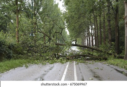 Many fallen trees on the road after a summer storm in the Netherlands
