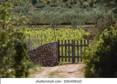 Many families living on Hvar produce a wide range of quality wines which are made from the autochthonous grape varieties Bugava, Rukatac and Plavac Mali all grown in their own vineyards.