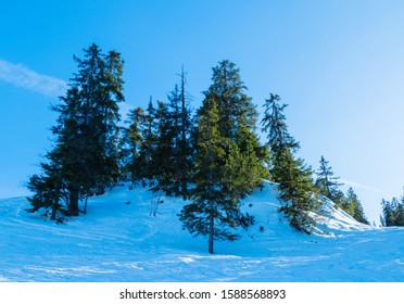 Many Fir Trees on Mountain Wank Germany