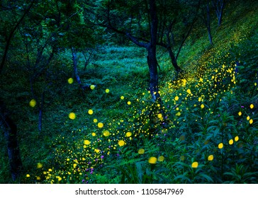 Many fireflies are flying (in the forest where spring thistle blooms)