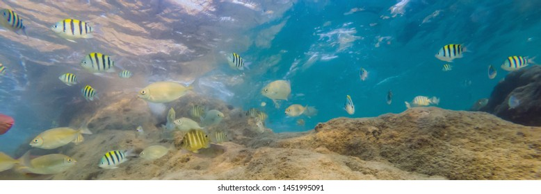 Many fish, anemonsand sea creatures, plants and corals under water near the seabed with sand and stones in blue and purple colors seascapes, views, sea life BANNER, LONG FORMAT