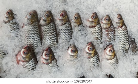 many fish in supermaket background