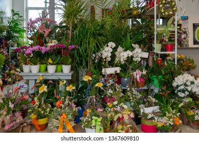 many flowers and bouquets stand in a florist's shop
