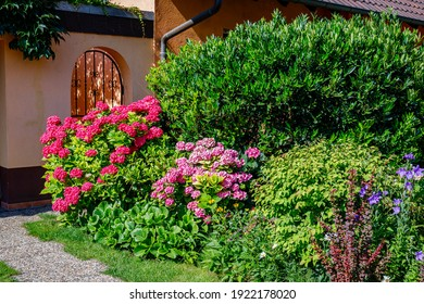 Many flowers in front garden near house wall. Bright pink Hydrangea macrophylla blossom in sunny day, close up.