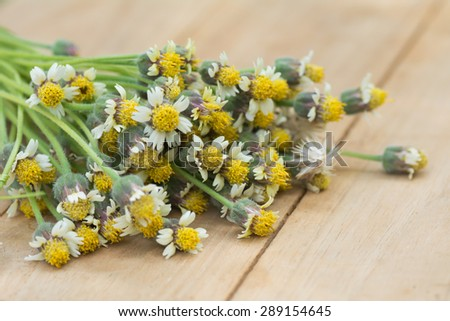 Many Flowers Grass Placed On Wooden Stock Photo Edit Now 289154645