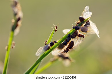 many flying ants crawling and flying in meadow during breeding time