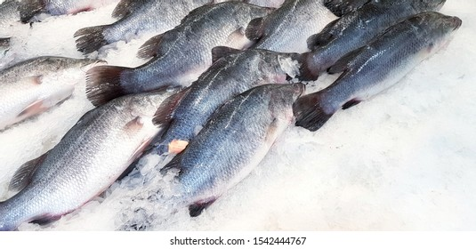 Many fresh Asian sea bass, Latidae or Barramundi fish freezing on ice for sale at seafood market or supermarket with right copy space