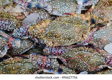 Many fresh Blue crab at seafood market, Pile on ice for still fresh.
