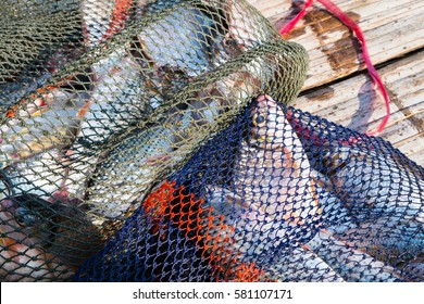 Many fresh fishes in the fish net from fisherman's boat on a urban bamboo wood floor.