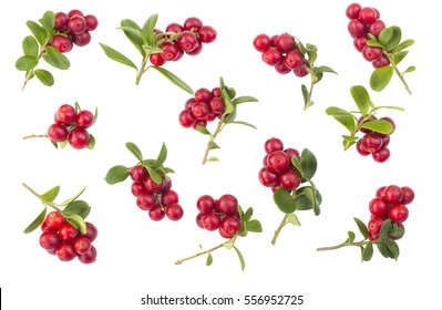 many fresh ripe branches of cranberries or cowberries with leaves isolated on white