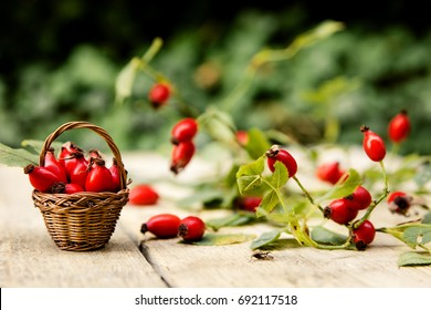 Many fresh rose hips on a table with basket