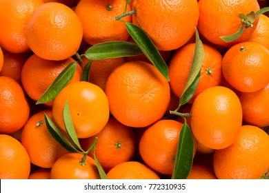 Many freshly picked tangerine fruits with green leaves as background. Top view.